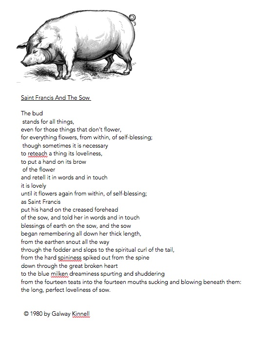 Sow and poem copy